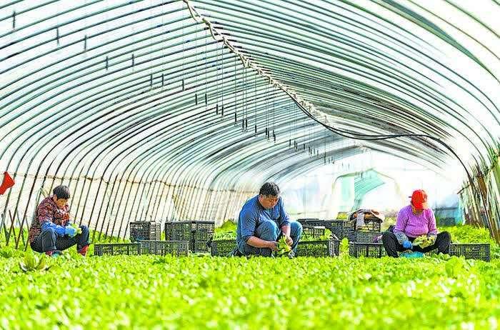 九州网站登录农户正在选购农机