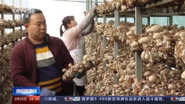 种蘑菇、养骆驼.....特 色财产助力村落振兴走新路