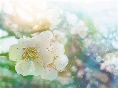 花粉带来春天烦恼 专家教你防护妙招