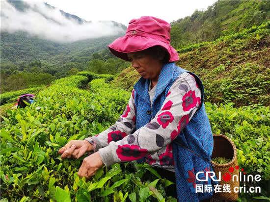【100年 70载 林芝高出】西126bet藏墨脱背崩村用小茶叶托起致富梦