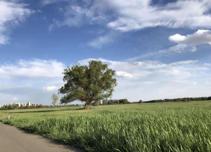 赛汗塔拉城中草原