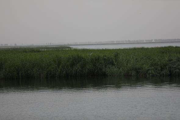 如今的乌梁素海,水质已一连好转。