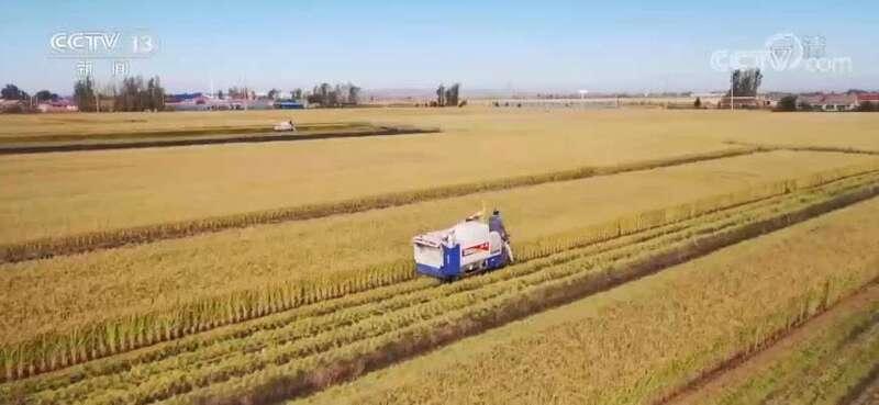 秋收一线的现代范儿 | 现代经营方式促农户与现代农业有机衔接